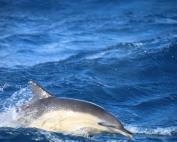 Marine mammals in Scotland